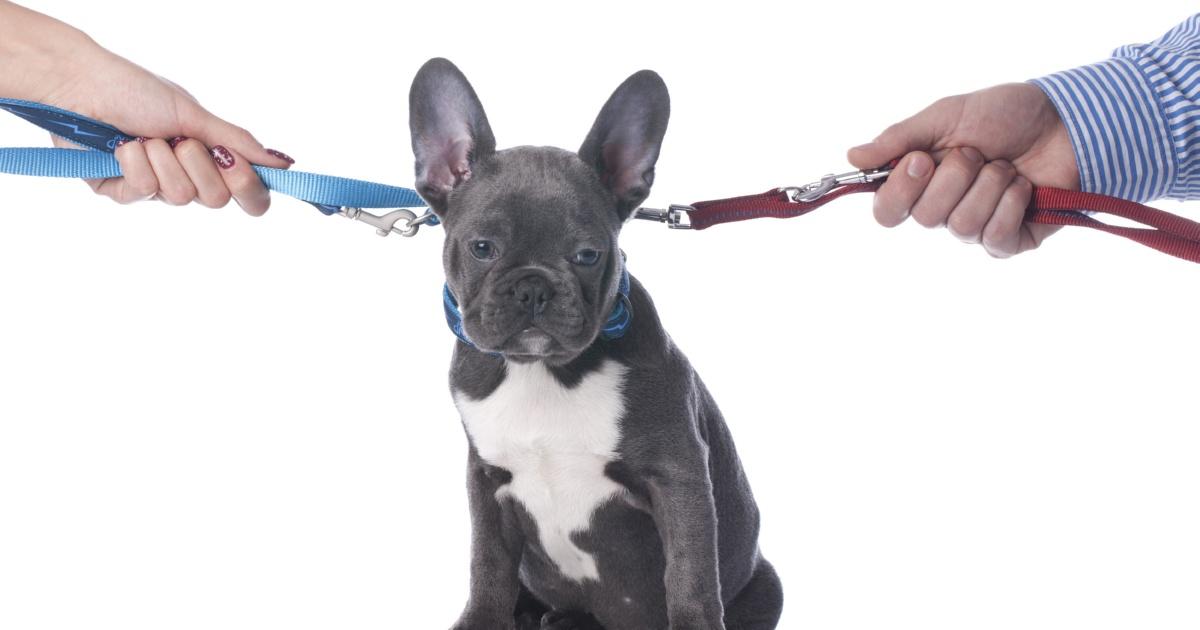 mascotas y ley de divorcio